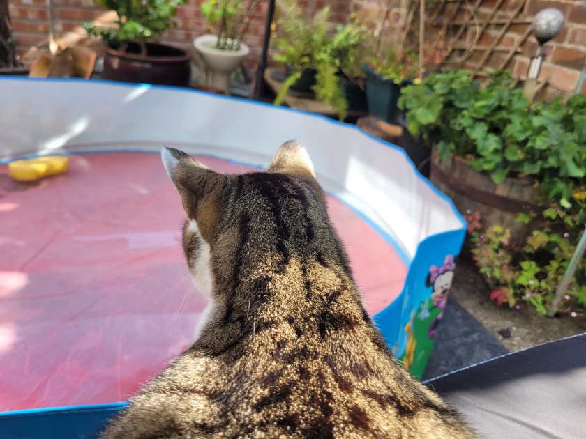 Cat looking down on a paddling pool which has dappled light playing on the surface